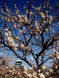 Plum Blossoms & Osaka Castle, Japan Photographic Print