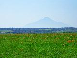 Sarobetsu Meadow Photographic Print