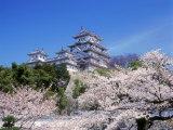 Cherry Blossoms and Himeji Castle Reprodukcja zdjęcia