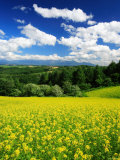 Rape Field Photographic Print
