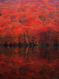 Autumn Forest and Lake Photographic Print