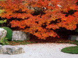 Garden with Autumn Leaves at Tenjuan, Nanzen-Ji Temple, Kyoto, Japan Photographic Print