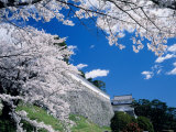Kasumiga-Jo Castle and Cherry Blossoms Photographic Print