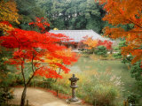 Garden of Joruriji Temple Photographic Print