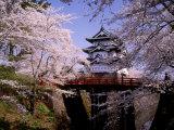 Cherry Blossoms and Hirosaki Castle Fotografická reprodukce