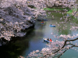 Cherry Blossoms and Moat Photographic Print