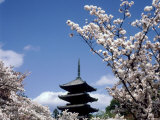 Pagoda &amp; Cherry Blossoms, Kyoto, Japan Photographic Print