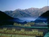 Rice Fields, Hakuba Mountains (Usiro-Tateyama Mountain Range), Nagano, Japan Photographic Print