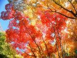 Jesienne liście Reprodukcja zdjęcia