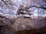 Castle and Cherry Blossoms Photographic Print