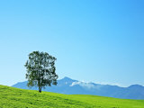 A Tree on the Hill Photographic Print