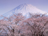 Kiraz Çiçekleri ve Fuji Dağı - Fotografik Baskı