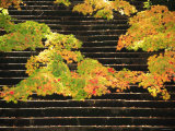 Autumn Leaves and Steps Photographic Print