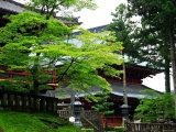 Rinnoji Temple Photographic Print