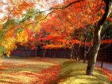Maple Trees Near Villa Katsura Photographic Print
