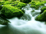 Mountain Stream Photographic Print