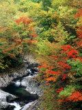 Autumn Leaves, Nakatsugawa, Fukushima, Japan Photographic Print
