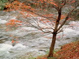 River and Autumn Leaves Photographic Print
