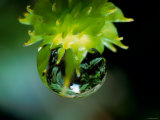 Waterdrops Photographic Print