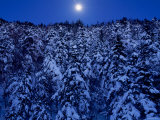 Moon Over the Winter Forest Photographic Print