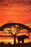 Coucher de soleil africain Photographie