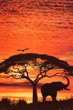Solnedgang i Afrika Billeder