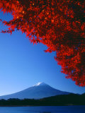 Mt. Fuji and Maple Leaves, Lake Kawaguchi, Yamanashi, Japan Photographic Print