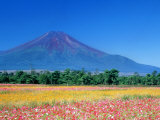 Mt. Fuji and Cosmos Flowers, Oshino, Yamanashi, Japan Photographic Print