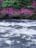 Rapid Stream Photographic Print