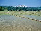 Rice Paddies and Mt. Chokai Photographic Print
