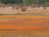 Marsh Photographic Print