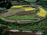 Rice Paddies in Autumn Photographic Print