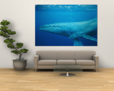 An Adult and Juvenile Humpback Whale Glide Through the Water Wall Mural by Wolcott Henry
