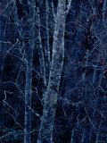 Beech Trees Photographic Print
