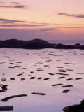 Inland Sea at Dawn Photographic Print