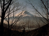 Mt. Fuji Beyond Trees Photographic Print