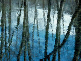 Reflection of Trees Photographic Print
