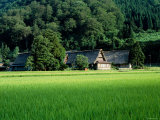 Rice Paddies and Old Farmhouse Photographic Print