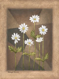 White Daisies Prints by Michael Marcon