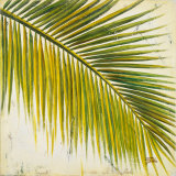 Baru Palm III Prints by Patricia Quintero-Pinto