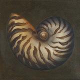 Seashell II Prints by Patricia Quintero-Pinto