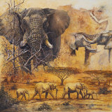Safari II Prints by Peter Blackwell