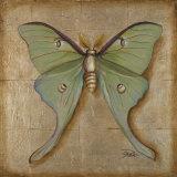 Luna Moth Poster by Patricia Quintero-Pinto