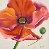 Poppy Flower II Prints by Patricia Quintero-Pinto