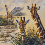 Safari IV Prints by Peter Blackwell