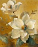 Magnolias Aglow at Sunset I Poster von Lanie Loreth