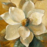 Magnolias Aglow at Sunset I (detail) Posters by Lanie Loreth