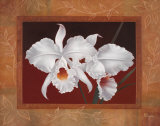 White Orchids Prints by Vivien Rhyan