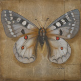 Butterfly II Prints by Patricia Quintero-Pinto