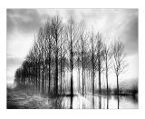 Trees in Normandy Prints by Bill Philip